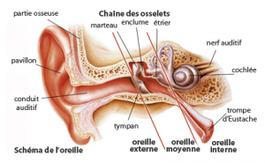 schéma de l'oreille