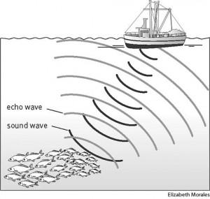 Un sonar